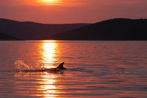 Abendhimmel über der kroatischen Adria von Gesellschaft zur Rettung der Delphine e.V.