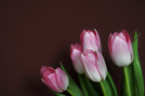 Tulpen I by Thomas Schaefer