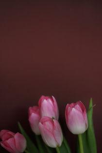 Tulpen II von Thomas Schaefer  (www.ts-fotografik.de)