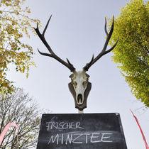 Geweihter Minztee? by Thomas Schaefer  (www.ts-fotografik.de)