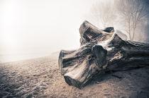 Baumriese am Winterstrand III by Thomas Schaefer