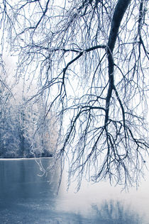 Winter Blues VI von Thomas Schaefer