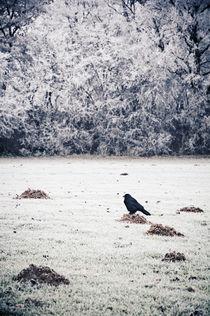 winterlicher Hausbesetzer von Thomas Schaefer