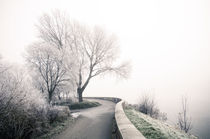 Winterlandschaft im Nebel II by Thomas Schaefer  (www.ts-fotografik.de)