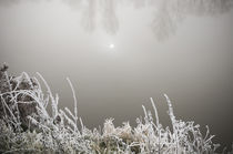 Winterlandschaft im Nebel IV by Thomas Schaefer