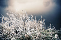 Winterlandschaft im Nebel V by Thomas Schaefer