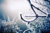 Frozen Landscape III von Thomas Schaefer
