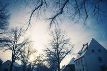 Winter-Bäumelinge I von Thomas Schaefer