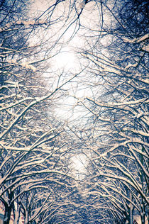 Winter-Bäumelinge III by Thomas Schaefer  (www.ts-fotografik.de)