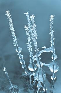 Eistropfen von Michael Schickert