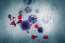 gefrorener Herbst #1 von Krystian Krawczyk
