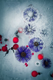 gefrorener Herbst #2 by Krystian Krawczyk