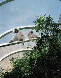Affenbande by René Ruis