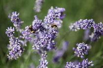 Blumen-und-bienen