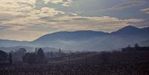 Misty Vineyard by Matheu Petley