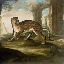 A Jaguar  by Andrea the Elder Scacciati
