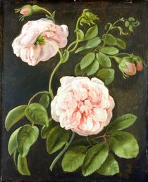 Flower Study  by Johann Friedrich August Tischbein