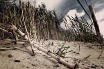 Dünen am Nordseestrand von Markus Hartmann