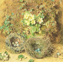 Primroses and Birds' Nests  by William Henry Hunt