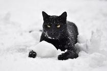 Schneekater von Thomas Schaefer