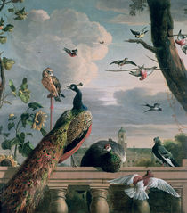 Palace of Amsterdam with Exotic Birds  by Melchior de Hondecoeter
