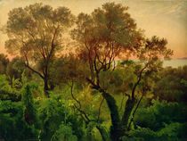 Slope with Olive Trees  by Louis Gurlitt
