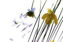 blüten by gudrun  petersen