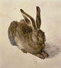 Hare von Albrecht Dürer