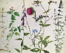 Eight Studies of Wild Flowers  von Albrecht Dürer