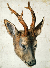Head of a Roe Deer  by Albrecht Dürer