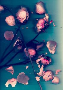 Water-roses