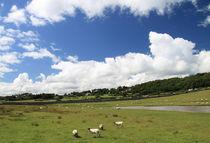 Walisische Schafe von Eva Stadler