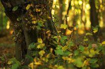 Herbstwald von Christian Stein