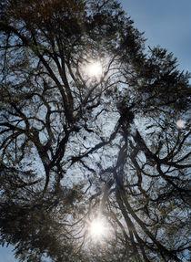 Trees von Elena Kulikova