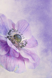 Lilac by Priska  Wettstein