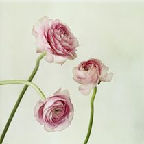 Copains by Priska  Wettstein