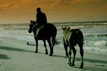 Horses on the beach by Jacek Maczka