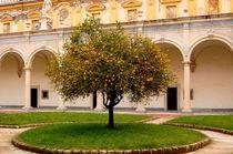 lemon tree von Zuzanna Nasidlak
