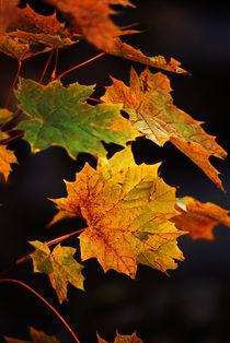 Autumn von Benny Pettersson