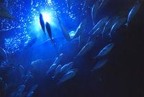 Mediterranean Blue fin Tuna von Tamàs Ibiza