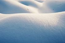 snowbody here? von Thomas Schaefer
