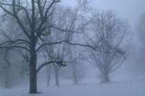 Trees on a foggy winter morning. by bob bingenheimer