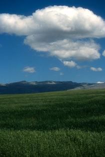 White cloud, blue sky, green field. Spain. by bob bingenheimer