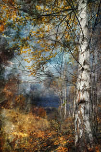 kootenay fall by Ursula I Abresch
