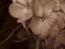 Macro flowers by bob bingenheimer