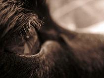 Reflections in a dog's eye by bob bingenheimer