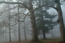 Trees in fog by bob bingenheimer