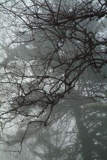 Tree branches emerging from fog. by bob bingenheimer