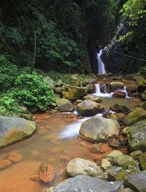 Forest Falls by Craig Ferguson