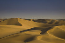 Golden Sand Dunes, Swakopmund by Russell Bevan Photography